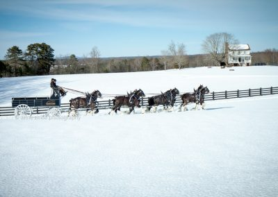 black-clydesdale-eight-hitch-team-snow