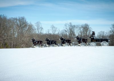 black-clydesdale-eight-hitch-team2