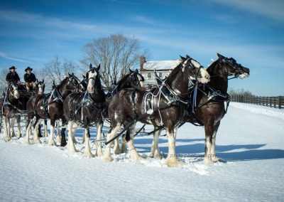 hunting-creek-farms-black-clydesdale-eight-hitch-snow3