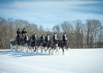 hunting-creek-farms-eight-hitch-team-black-clydesdales-snow3